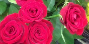 Roses for sale | Come walk with Sharon at SharonsWalkabout.com