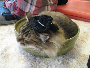 Cat in a hat! | Come walk with Sharon at SharonsWalkabout.com