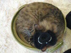 Cat in a bowl! | Come walk with Sharon at SharonsWalkabout.com